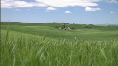 Palouse Wheat Field Lush Green 3 Stock Footage