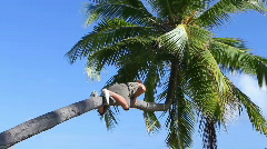 Man is climbing on a palm tree Stock Footage