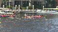 Dragon Boat Race HD Footage