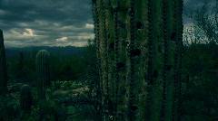 T182 saguaro lightning epic cacti cactus american southwest Stock Footage