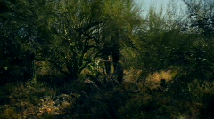 t182 saguaro desert drive by dry - stock footage