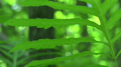 Broad-leafed plant Stock Footage