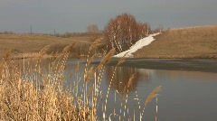 Dry common reed grass (Phragmites australis) swaying in the wind against a sprin Stock Footage