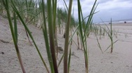Stock Video Footage of Beach grass little bug