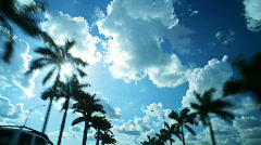 HD driving with palm trees Stock Footage