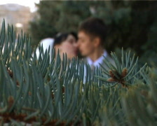 Focusing from branch of  firtree to kissing bride and bridegroom Stock Footage