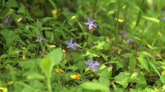 Wild flowers in the forest in spring Stock Footage
