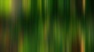T184 palm tree artsy film 35mm Stock Footage