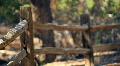 t184 rack focus desert gate Footage