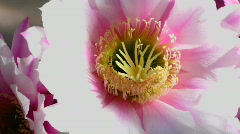 Flower Art Close Up Stock Footage