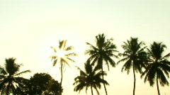 Sun shining trough palm trees, Kerala, India Stock Footage