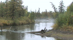 The forest river. Stock Footage