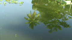 Palm trees reflection on blue water, Backwaters, Cochin, Kerala, India Stock Footage