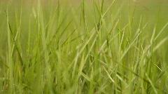 Closeup of grass.  Stock Footage