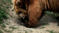 Kamtschatka bear Stock Footage