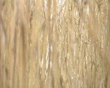 Lake birds Stock Footage