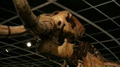 Mastodon Tusks Stock Footage