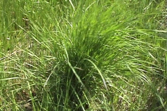 Grassy bush Stock Footage