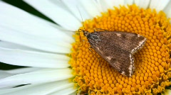 Moth. Stock Footage
