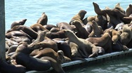 Oodles of sea lions on a pier Stock Footage