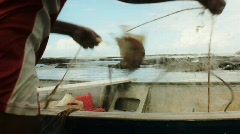 Fish on net - stock footage