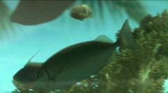 Underwater fish life 1 Stock Footage
