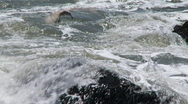 Stock Video Footage of gull avoiding waves