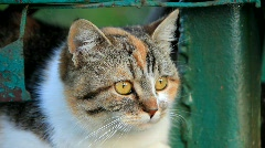 Cat with yellow eyes Stock Footage