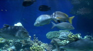 Underwater fish life 4 Stock Footage