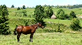 Horse on the meadow Footage