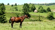 Horse on the meadow Stock Footage