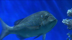 Underwater fish life 6 Stock Footage