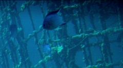 Underwater fish life 8 Stock Footage