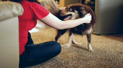 Dog playing in Living Room Stock Footage