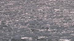 Lake Travis, Travis County Texas48 Stock Footage