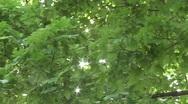 Foliage 1 Stock Footage
