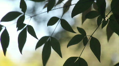 Graceful leaves Stock Footage