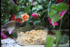 Two birds at a feeder with flowers ntsc Stock Footage