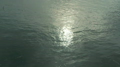 Ripples on a pond. Stock Footage