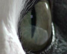 Cat's Eye - stock footage