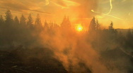 Forest fire at sunset Stock Footage