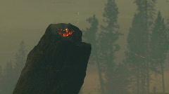 Smoldering Stump on Fire Stock Footage