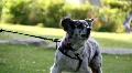 barking dog Footage