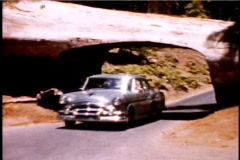 1950's cars drving through giant redwood trees in California 1950's 8mm footage Stock Footage