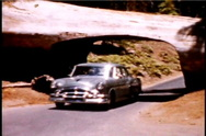 Stock Video Footage of 1950's cars drving through giant redwood trees in California 1950's 8mm footage