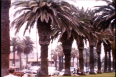 1950's California Palm Trees 8mm footage - stock footage