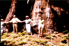 Giant Redwood Trees in California 1950's - stock footage