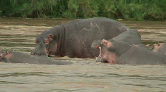 Malawi: hippopotamus in the wild 11 Stock Footage