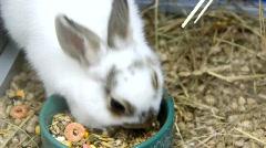 Funny rabbits Stock Footage