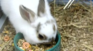 Funny rabbits Stock Footage